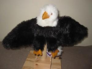 Bird 28 Eagle